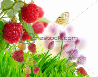 Berries And Grass