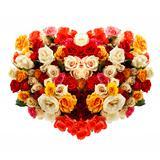 Fresh roses in heart shape over white