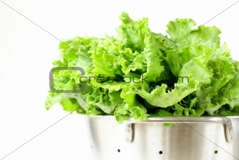 green lettuce in metal colander on a white background