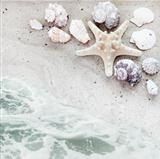 Sea Shells and Serf Background