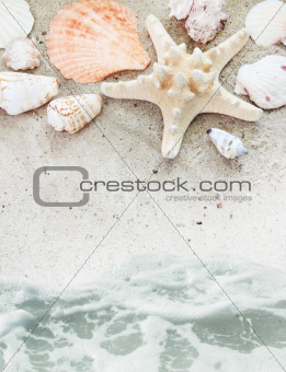 Sea Beach with Shells Border