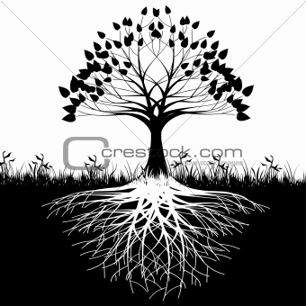 Trees-Afforestation