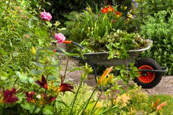 Summer garden with flowers and wheelbarrow