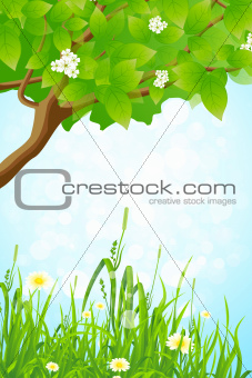 Green Grass and Tree Branch