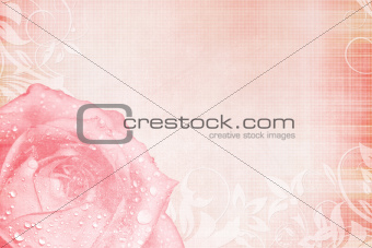 Beautiful pink Rose Card for invitation or congratulation