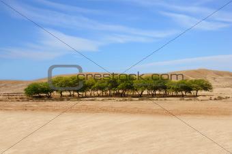 An oasis in a desert