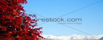 Red tree with Alps background