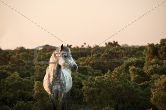 Beauttiful close up of New Forest pony horse bathed in fresh daw