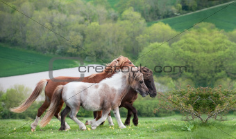 Farm horse in rural landscape in Spring
