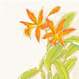 Branch of orange orchids on toned background