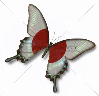 Japanese flag on butterfly