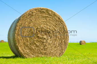 Big hay bale roll in a green field