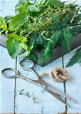 Herbs and scissors.