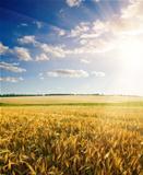 field under cloudy sky with sun