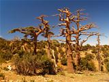 Dry trees in mountains of Morocco