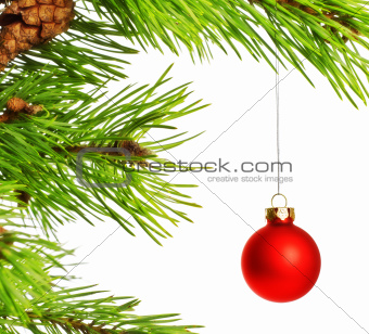 decoration ball on pine branch