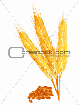 abstract wheat ears with ripe