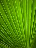Green leaf Line background