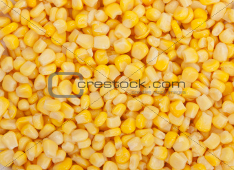 Background of corn