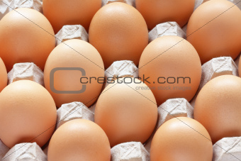 Brown eggs in carton tray