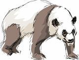 drawn a panda