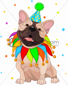 French bulldog€™s Birthday