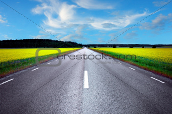 Asphalt road in rape field