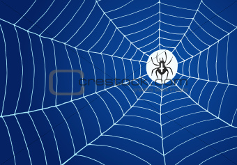 Spider and Net Illustration