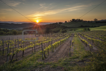 Sunrise at a Tuscan Vineyard