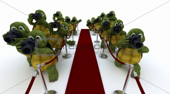 Tortoise Paparazzi at the red carpet