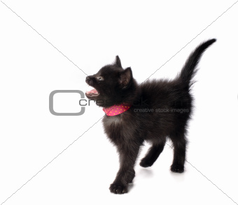Small kitten with ribbon