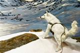 Arctic Wolf