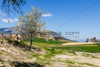 A Green landscape with Tree