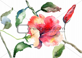 Watercolor illustration of Beautiful flowers