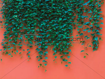 green leaves on orange wall