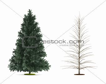 Alpine Fir Tree.