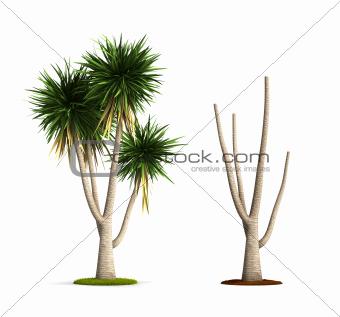 Yucca Tree.
