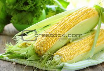 fresh corn vegetable   on wooden table