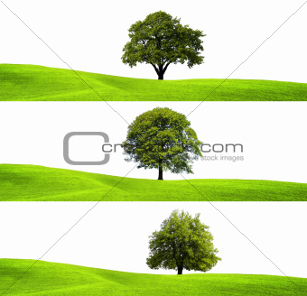 Green environment and tree
