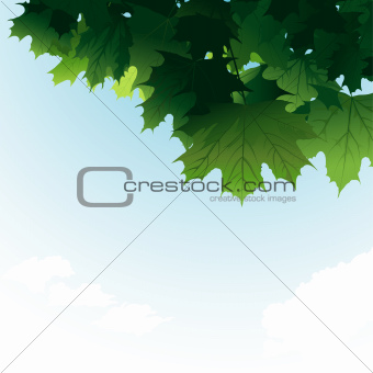 Green Maple Leaves In The Sky