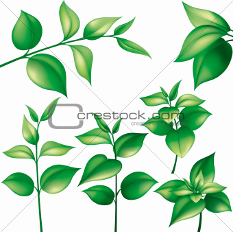 Collection of green leaves, isolated on white background