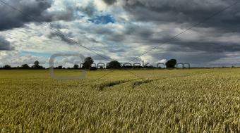 Rye field, Denmark