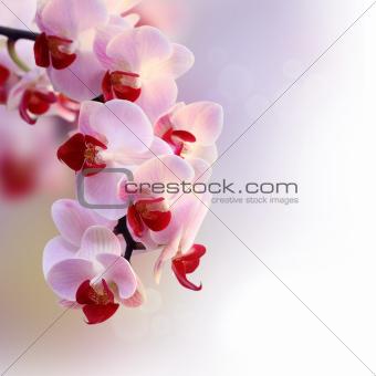 Beautiful orchid purple