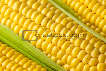 Grains of ripe Corn /  Macro