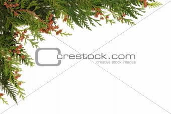 Cedar Cypress Leaf Border