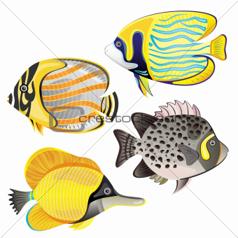 Exotic fish set isolated on white background