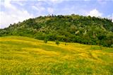 Flower meadows of the hills