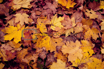 Background from autumn