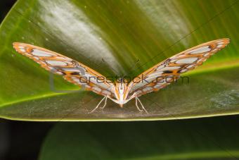Beautiful Butterfly in closeup view