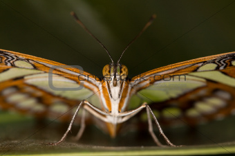 Beautiful Butterfly in closeup view